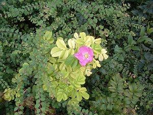 Blüte am Straßenrand