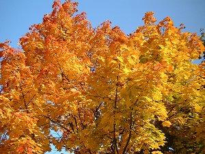Herbstlich bunter Baum