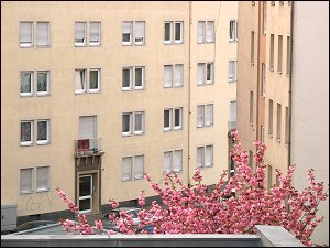 Baumblüte in FÜ
