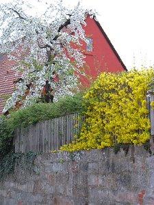 Frühling in Fürth-Dambach