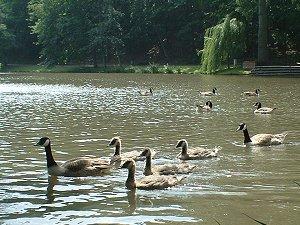 Schwimmunterricht im Stadtpark