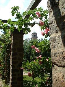 Rosen im Stadtpark