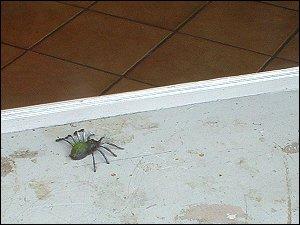 Spielzeug-Spinne