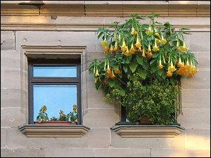 Blumenfenster in der Neumannstraße