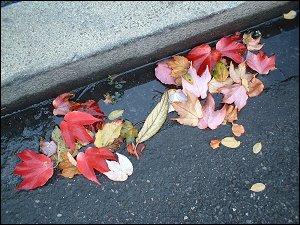 Herbstlaub am Straßenrand