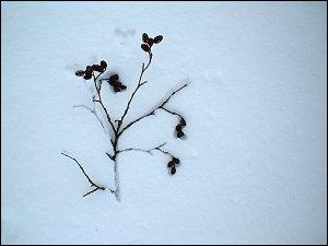 Schnee in der Fränkischen Schweiz