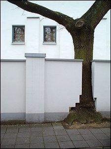 Ein Baum in Nürnberg
