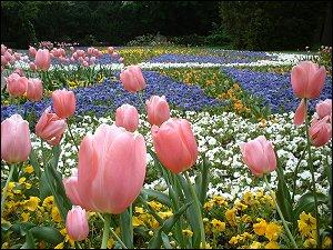 Blumenmeer im Stadtpark