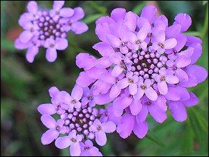 unbekannte Blumensorte