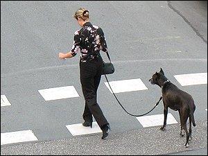 Frau mit Hund, die Kreuzung querend