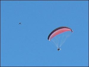 Gleitschirmflieger und Vogel, Ausschnittvergrößerung