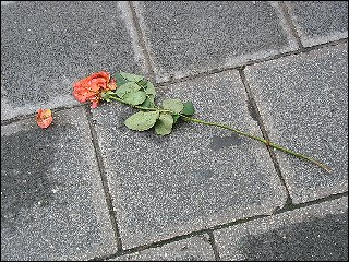 weggeworfende Rose vor dem Nürnberger Hauptbahnhof