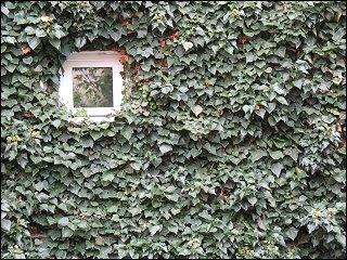 Hauswand in einem versteckt gelegenen Fürther Hinterhof