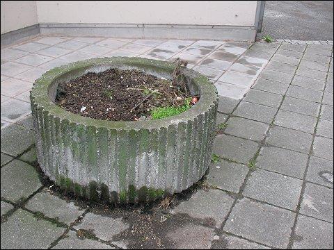 Beton-Pflanzkübel am Frauentorgraben in Nürnberg
