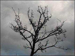 Baum im Steiner Wiesengrund, an Orson Welles' Shakespeare-Verfilmung erinnernd