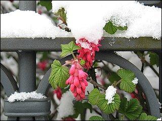 Schneedecke in der Karolinenstraße