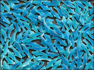 Kunstwerk aus Gummibonbon-Haifischen (Ausschnitt)