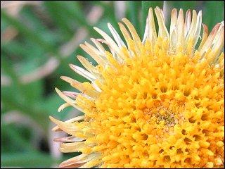 Blüte ohne Blütenblätter