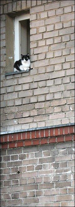 neugierige Katze im 4. Stock eines Nachbarhauses