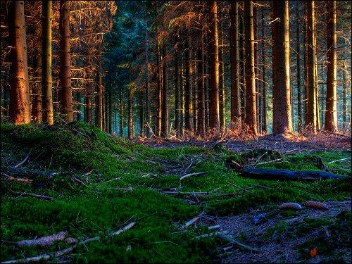 im Wald vor Aachen