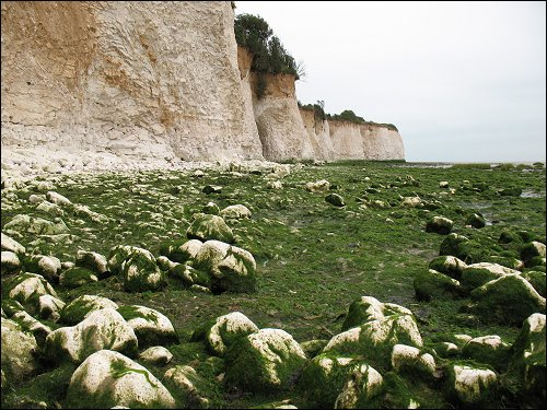 weiße Kreideklippen nördlich von Dover