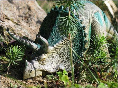 ein eher schlecht draufer Triceratops