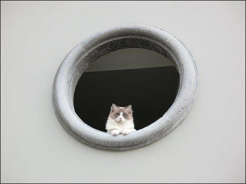 Katzenaugen im Bullauge