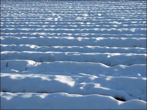 winterliches Spargelfeld bei Stein im Landkreis Fürth
