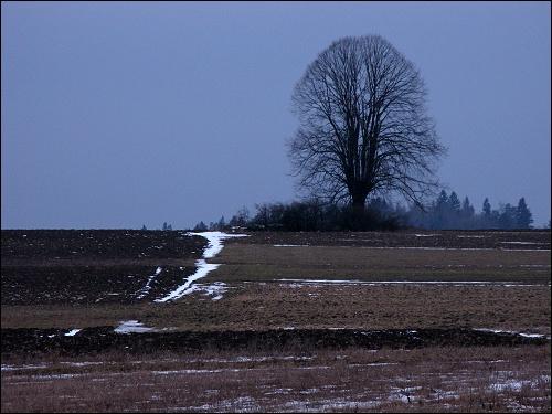 auf dem immer noch winterlichen Hochplateau bei Burg Feuerstein