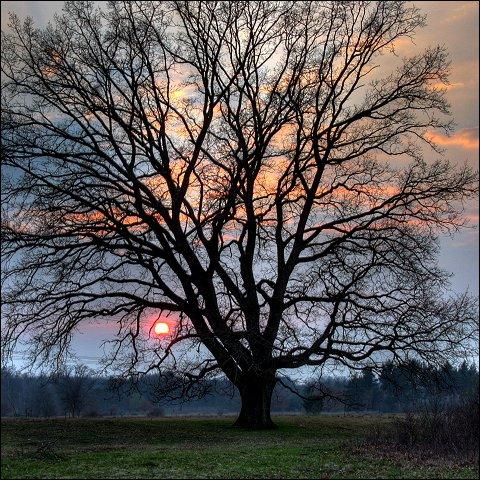 Sonnenuntergang im Naturschutzgebiet Hainberg