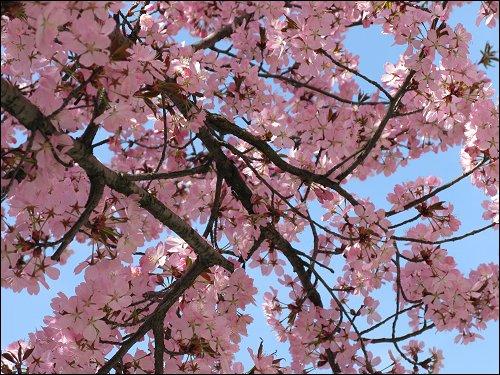 Frühling auf dem Nürnberger Klarissenplatz