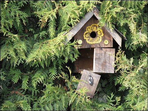 aufgegebenes Vogelhäuschen in aufgegebener Kleingartenkolonie