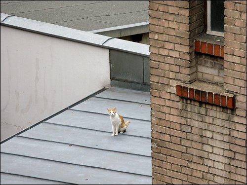 Katze auf dem kalten Blechdach im benachbarten Hinterhof