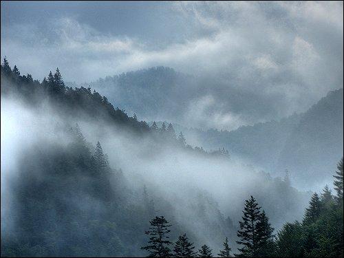 Morgennebel im Vorgebirge