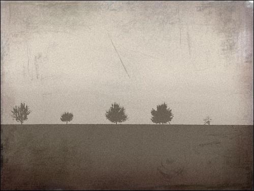 dunkler Acker, dunkle Bäume, dunkler Himmel