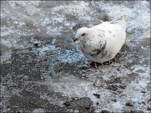 Eine Taube macht noch keinen Sommer