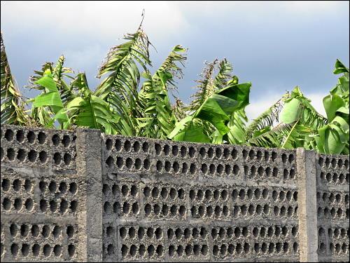 luftdurchlässige Mauer um eine Bananen-Plantage