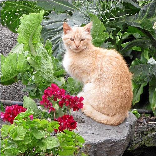 nur leicht zerzauste Katze, die augenscheinlich ein Zuhause hat...