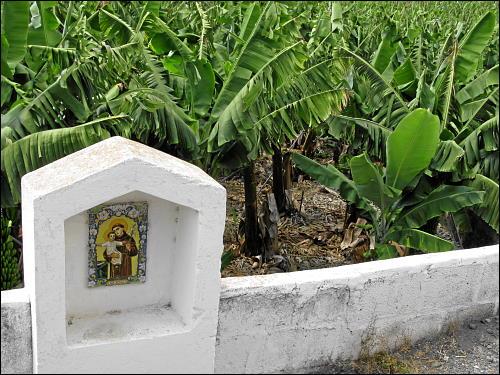 Bananenplantage bei Los Llanos