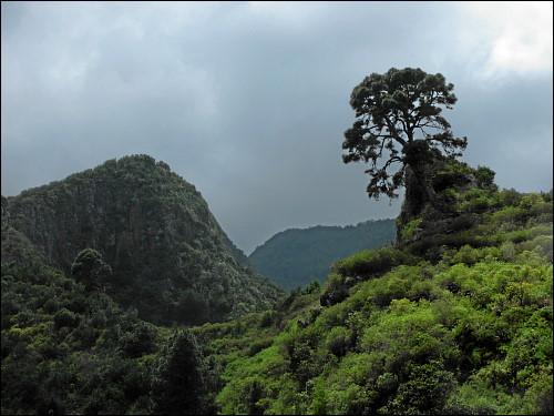 üppiger Regenwald im Nordosten La Palmas