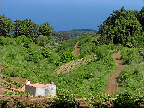 Weinanbau im Westen La Palmas