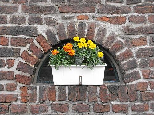 kleinbürgerlicher Blumenschmuck in der Siedlung Eisenheim
