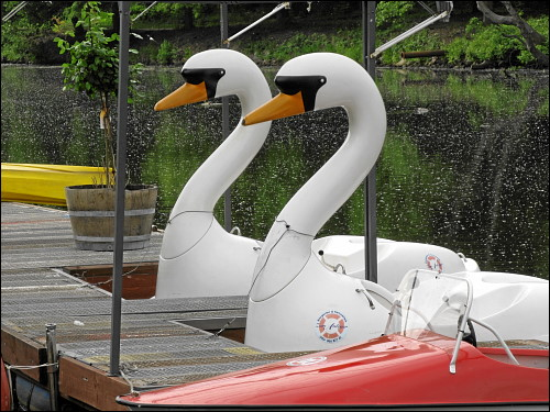 Ausflugsboote für Möchtegern-Lohengrins
