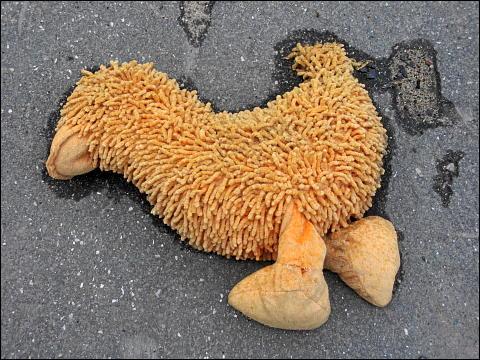 abgestoßenes Plüschvieh, vom Regen durchtränkt auf der Straße liegend