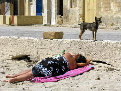 Beim Sonnenbad: schlafende Frau und wacher Hund