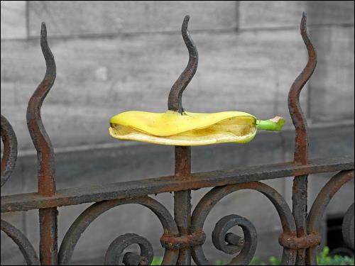 aufgespießte Bananenschale auf einen Zaun an der Karolinenstraße