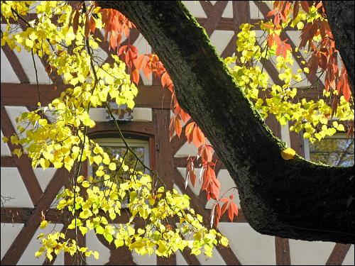 herbstlich bunter Baum in Kirchröttenbach