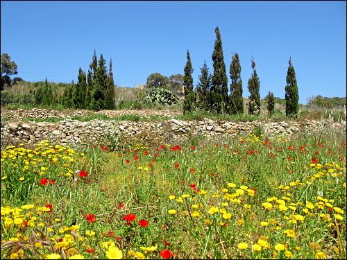 bunter Frühling auf Gozo