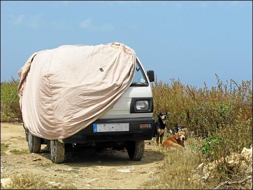 strickendes Frauchen (im Fahrzeug), dösende Hundchen (davor)