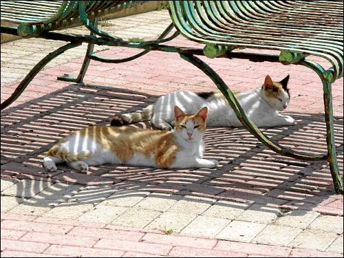 Katzen beim kollegialen Dösen